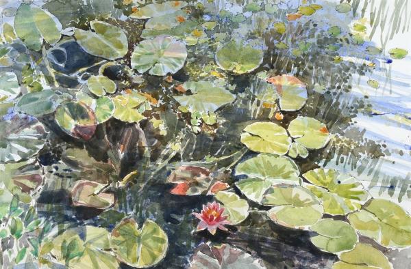 carol-scouller_water-lilies-watercolour-35x54cm